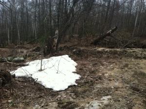 snow at mollys meadow