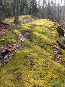 Mossy stretch on 3rd loop